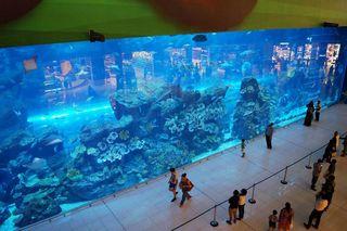dubai-aquarium-4375_xl.jpg